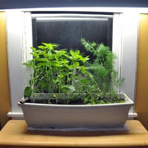 Herbs Grown in an Indoor Container